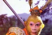 关于是否支持六小龄童演员参与2016年猴年春晚的调查